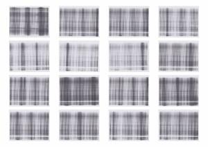 White 3 - 3 paginas (prueba) 2