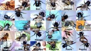 Fotos de los grillos con sus nombres